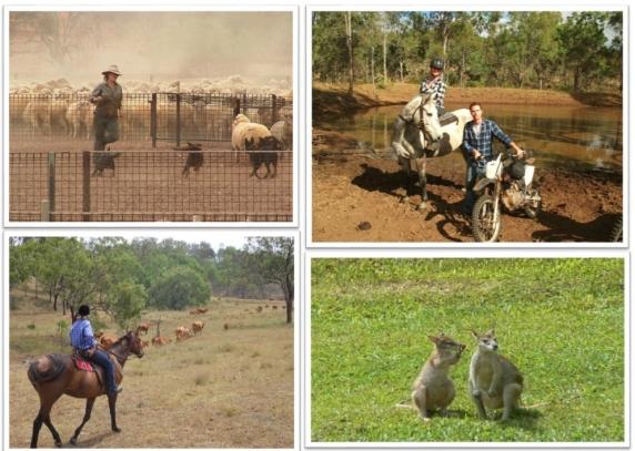 Naujiena - Australia Rural internship