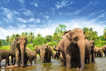 sri-lanka-elephants-1600x900_2183-5af71d47c713a8125a35a48474e50ec4.jpg